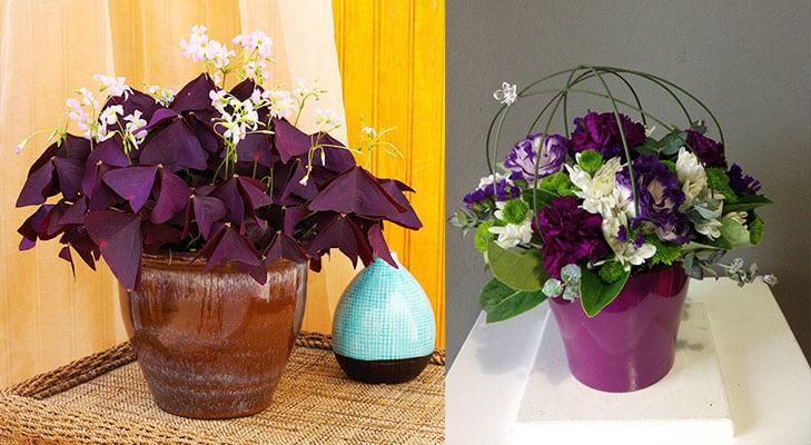 Vastu tips purple plant @TheRoyaleIndia