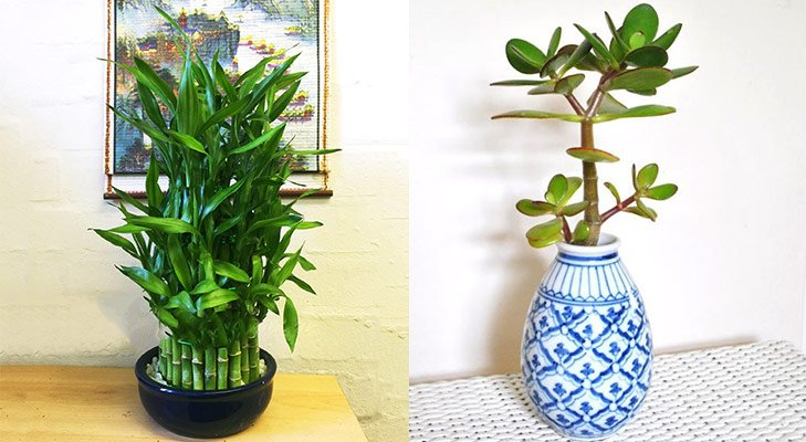 Feng shui tips for luck Plants blue pot @TheRoyaleIndia