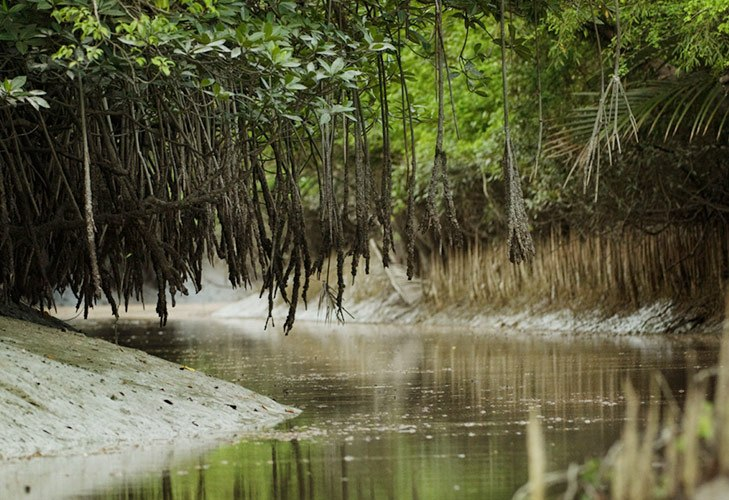 Tourist Places in India Sunderbans