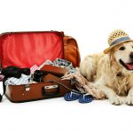Top 17 Pet-Friendly Resorts in India
