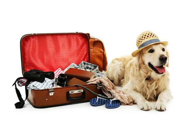 Pet-Friendly Resorts in India @TheRoyaleIndia
